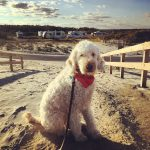 No-fail tips for RVing with dogs
